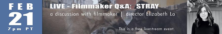 filmmakerQA-LIVE-STRAY.png