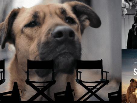 Filmmaker Q&A: STRAY