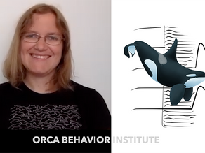 Orca Behavior Institute, tracking a tenuous time for Southern Resident killer whales and salmon