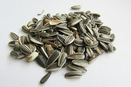 sunflower-seeds-537651_1920 (1).jpg