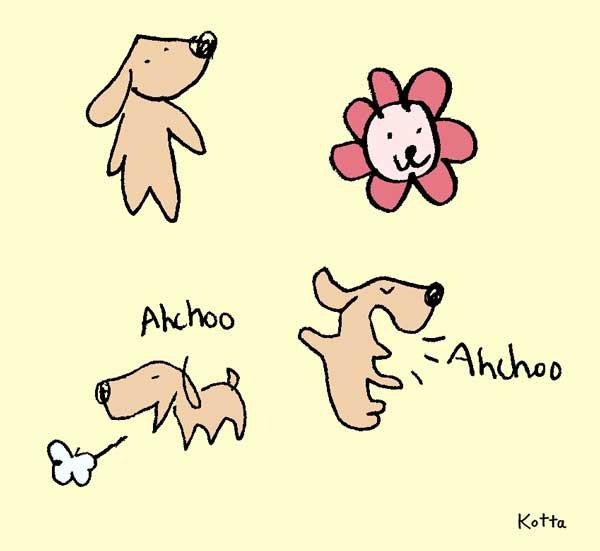2009 Ahchoo