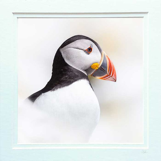Puffin Perfection