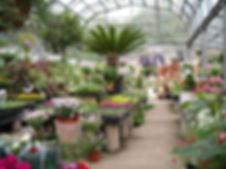 purchasing plant