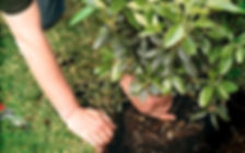 installing bush