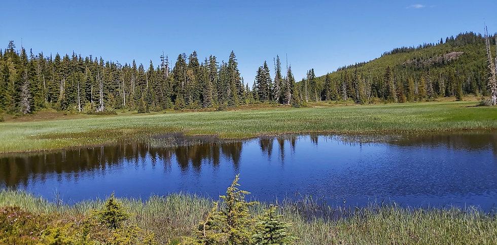 Meadows Pan.jpg