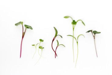 Plantscription Photo (12).jpg