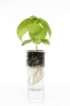 Plantscription Photo (64).jpg