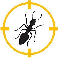 plaga hormigas barcelona