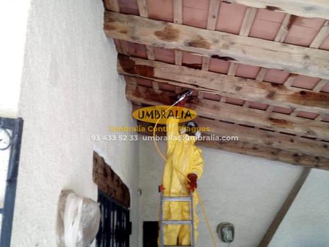 Como eliminar la carcoma - tratamiento en vigas y porche de madera exterior
