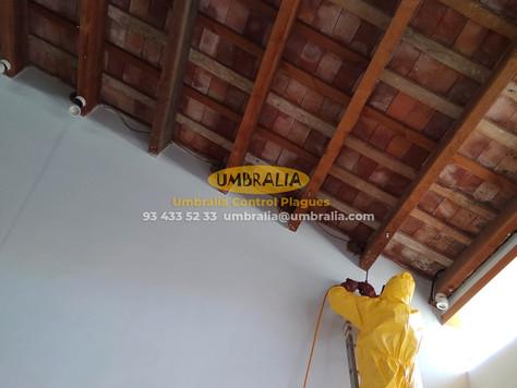 > Tractament de fusta per eliminar corcs en una vivenda a Vilassar
