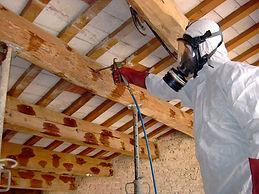 Eliminar carcoma y termita