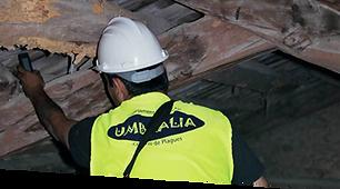 empresa de control de plagues per realitzar tractaments de la fusta