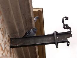 Eliminar palomas, gaviotas y otras aves.