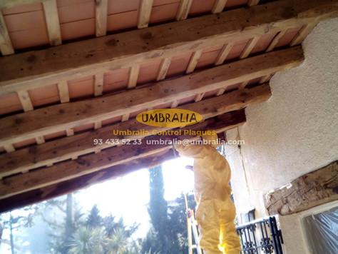 > Tractament per eliminar corcs en bigues i porxo de fusta a una masia a Girona