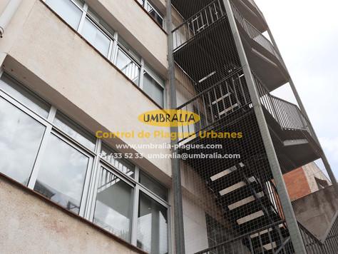 > Instal·lació de xarxes anti coloms al col·legi Sant Lluis de Barcelona