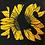 Thumbnail: KS Sunflower - Women's Tanks