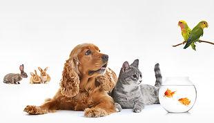 Promenade chien soin animaux de compagnie Dog Sitter Vendée Les Herbiers Saing Fulgent Vendrennes Les Epesses Sèvremont