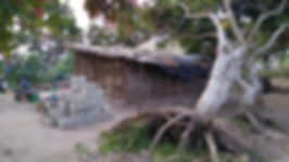 Matilde - Fallen Tree.jpg