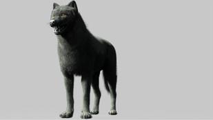 Wolf Fibermesh
