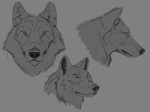 Wolf Face Structure