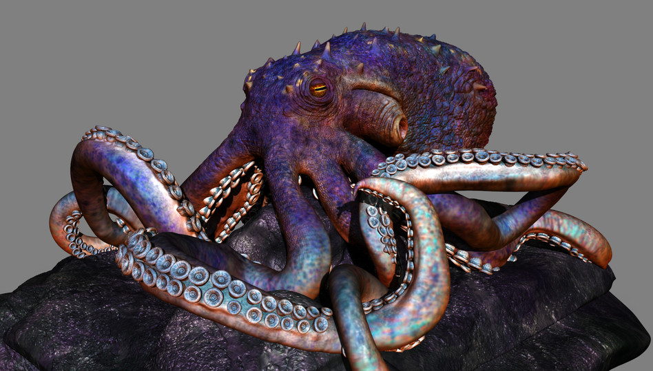 Octopus Side View