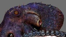 Octopus Side Detail