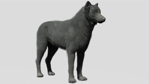 Wolf Fibermesh Closed Mouth