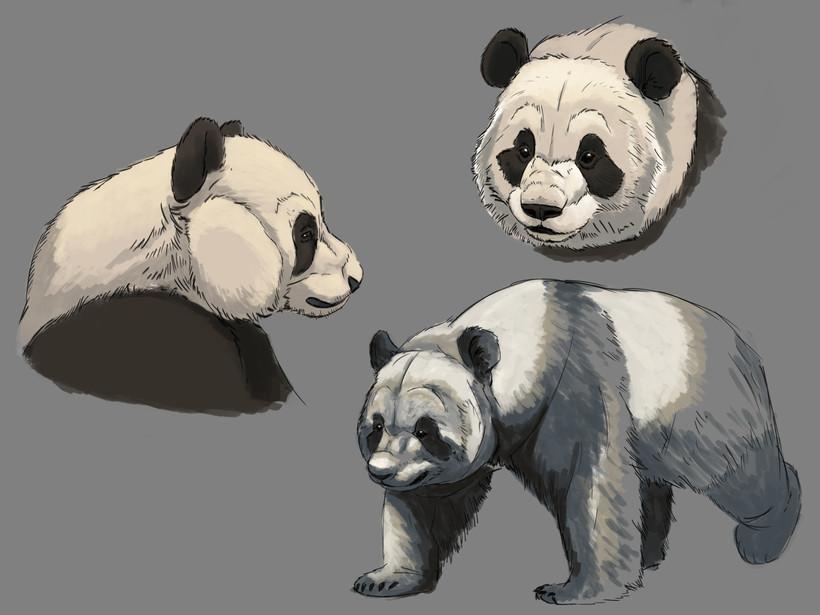 Panda Study