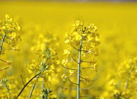 Setembro amarelo: mês da prevenção do suicídio!