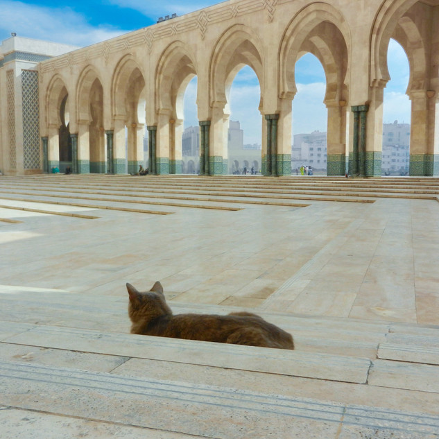 Morocco Travel Shoot, by Dayna Petry