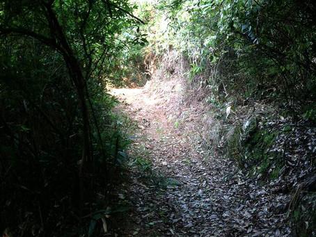 Blog 8: A Disorganized Tea Mountain