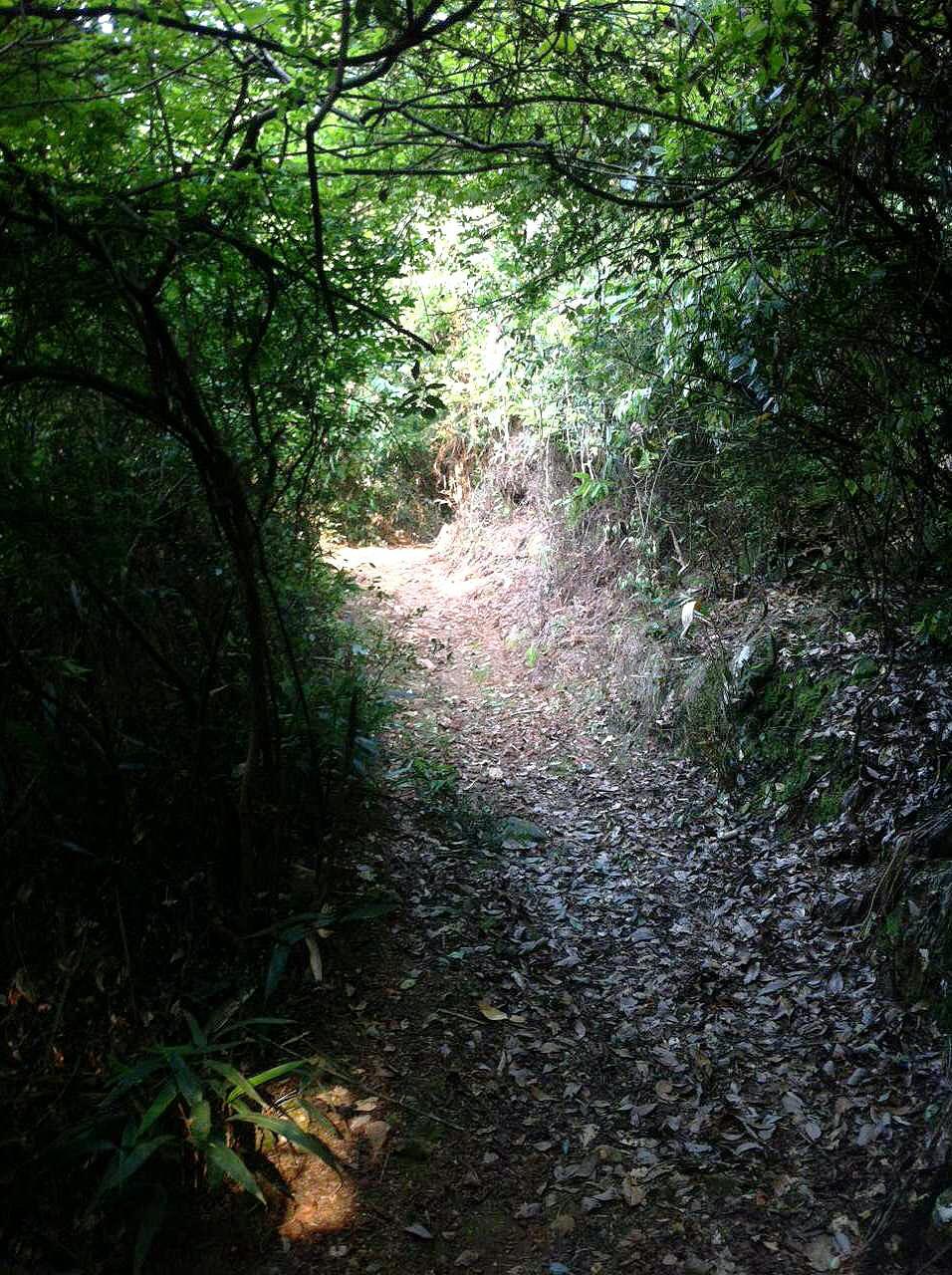 The Trail into Our Tea Mountain