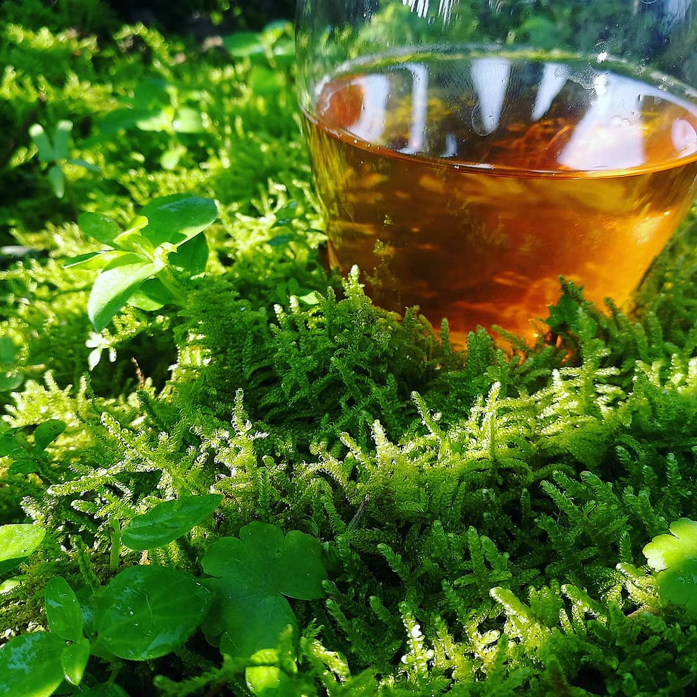 Valley Brook Tea | Blog | Our Shui Xian plants are often moss-covered, and they acquire unique flavors from the nature