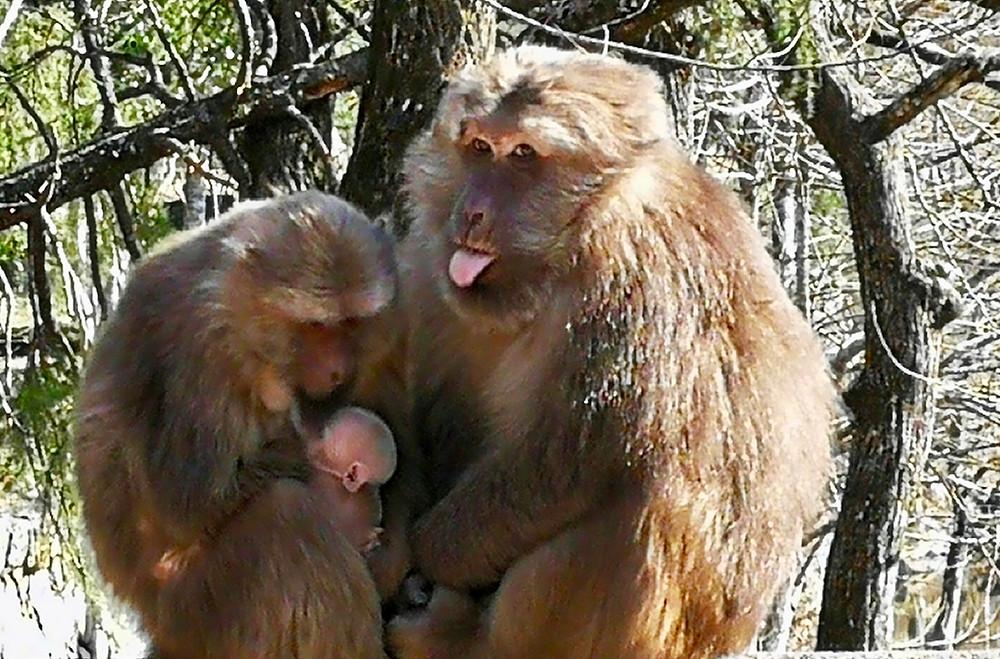 Monkeys in Tong-Mu
