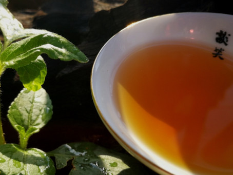 Blog 110: Storing Tea in the Refrigerator?