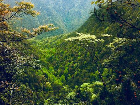 Blog 9: Sound of Tong-Mu