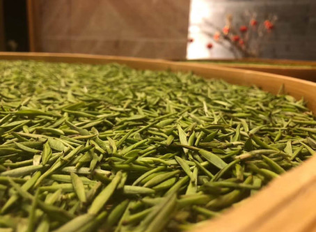 Blog 162: The Development of Black Tea's Aromas