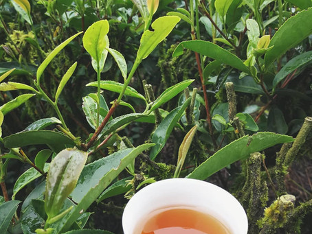Blog 134: What Wuyi Teas Are Available in Early Summer?