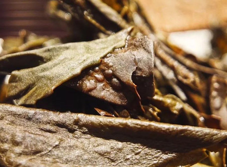"""Blog 153: Wuyi Oolong's """"Toad's Back"""""""