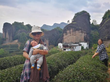 Blog 3: Women in Wu-Yi Rock Tea-making