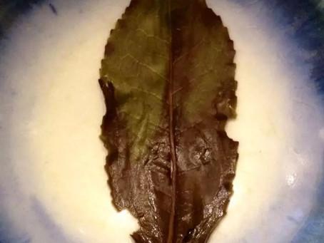 """Blog 59: Understand the """"Leaf Bottom"""""""