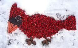 Snow Cardinal Cranberries