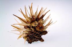 Pinecone Porcupine