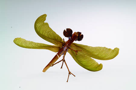 Pinecone Dragonfly