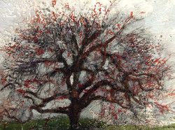 Japanese maple in spring  SOLD