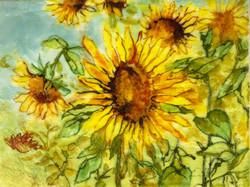 Sunflower blues  SOLD