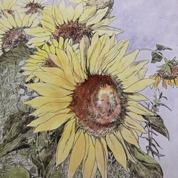 August Sunflowers