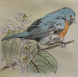 Insects??  (Bluebird)