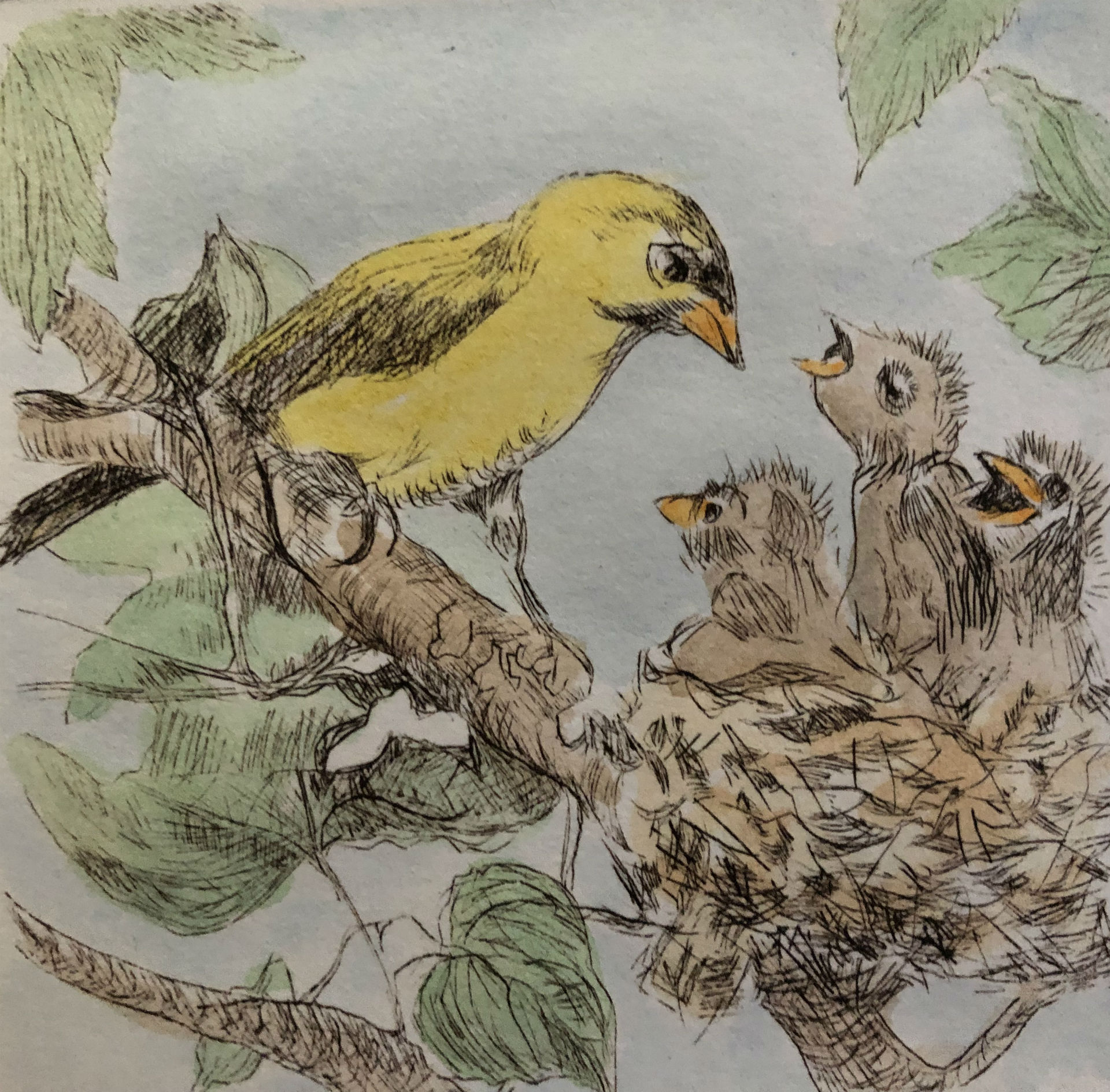 Where's lunch  (Gold Finch)