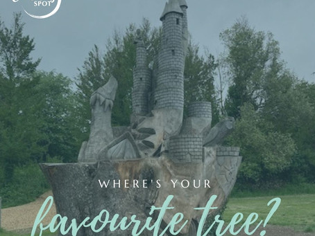 Where is your favourite tree?